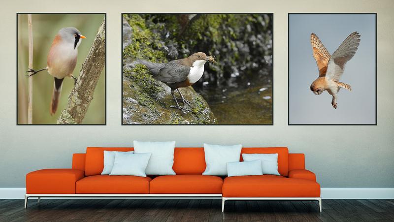 EXMOOR PHOTO BIRDS PG2020