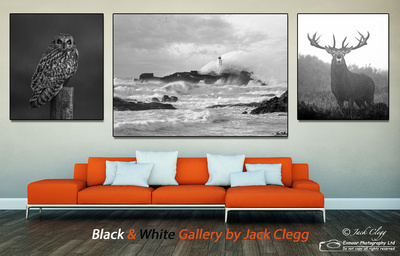 BLACK AND WHITE GALLERY LANDING IMAGE