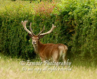 RED DEER EP9757A