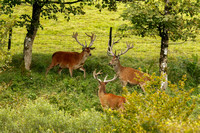 Latest Images Red Deer