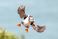 PUFFIN EP 4247