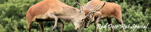 RED DEER EP 9645 PAGE HEADER